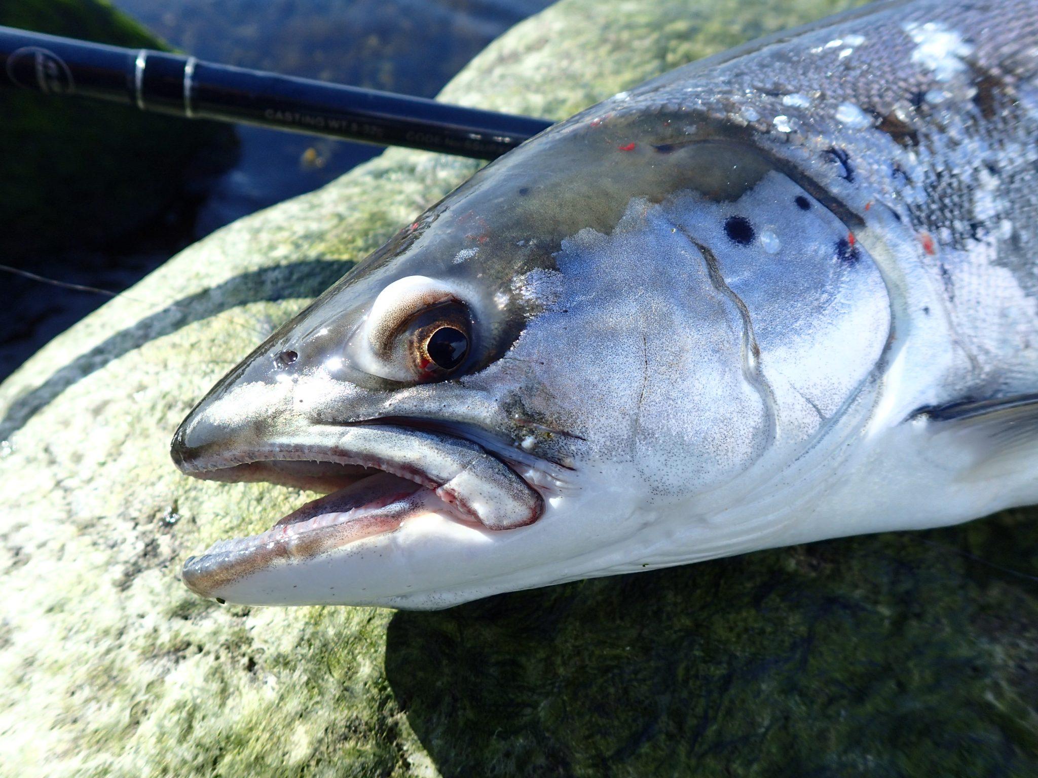 Sommerfiskeri i Augustenborg Fjord er ofte fangstgivende i den yderste del af fjorden.